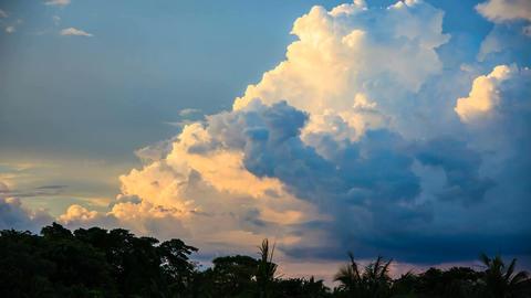 cloud palm cloud sky Live Action