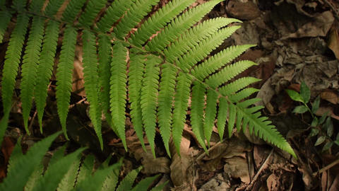 Play of light and shadow on Fern leaves Footage