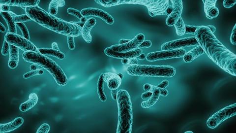 Bacteria Animation