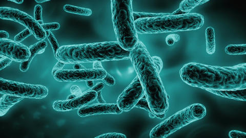 Bacteria Stock Video Footage