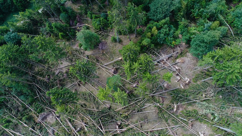 Storm damage in the forest - aerial view Live Action