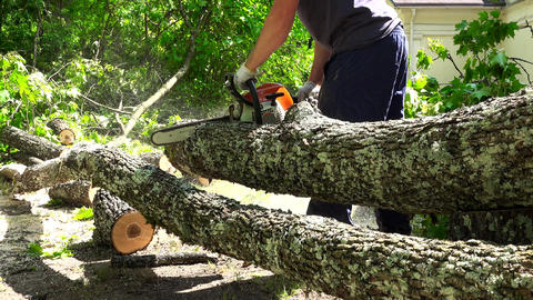 Man sawing the trunk of maple tree in garden with chainsaw Footage