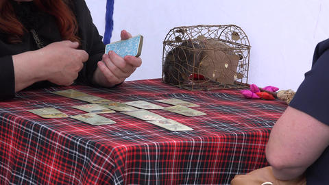 Fortune teller woman use tarot cards and rat in cage in outdoor tent. 4K Footage