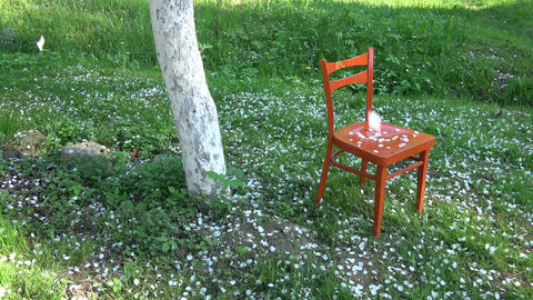 apple tree petals falling in spring on red wooden chair in garden Footage
