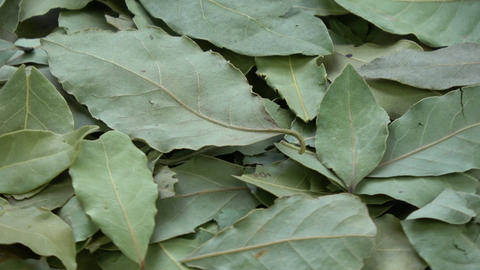 Rotating laurel leaves background Footage
