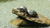 Turtles Footage