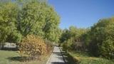 Autumn Park 01 (static) Footage