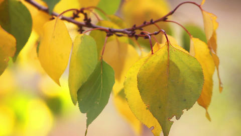 Autumn leaves 2 Stock Video Footage
