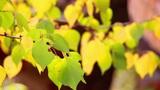Autumn leaves 6 Footage