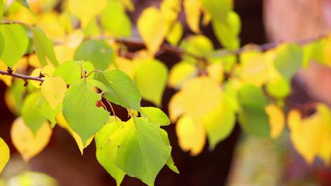 Autumn leaves 6 Stock Video Footage