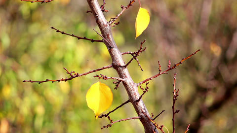 Autumn leaves 10 Stock Video Footage