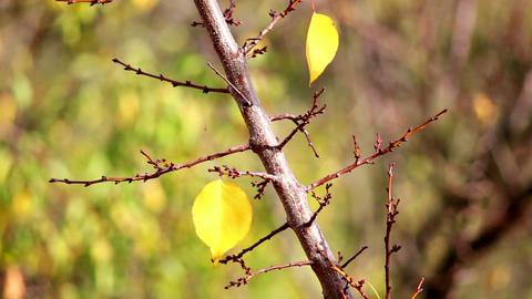 Autumn leaves 10 ライブ動画