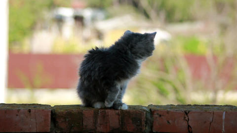 Cat on a fence 1 Stock Video Footage