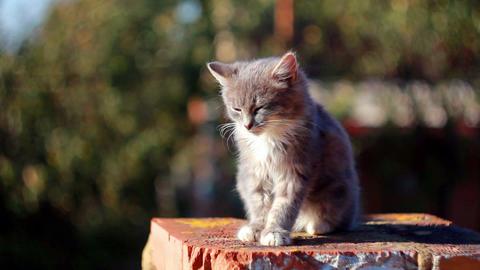 Cat on a fence 5 Stock Video Footage