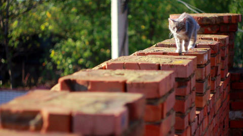 Cat on a fence 9 Stock Video Footage
