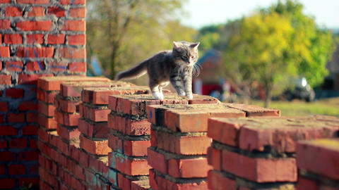 Cat on a fence 11 Stock Video Footage