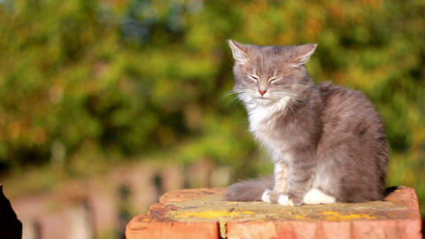 Cat on a fence 13 Stock Video Footage