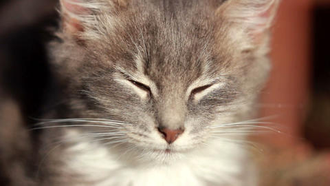 Cat on a fence 15 Stock Video Footage
