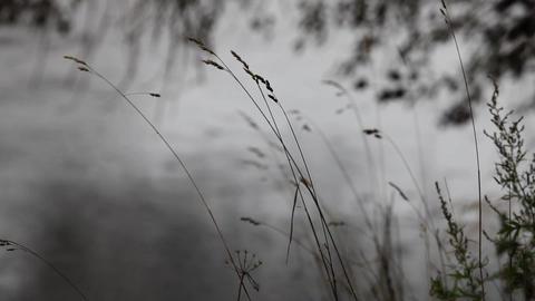 autumn rain Stock Video Footage