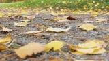 autumn pass Footage