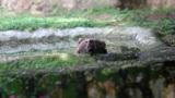 Bear 01 Footage
