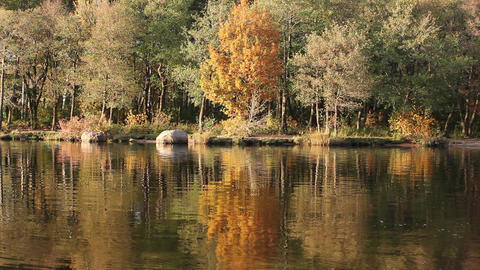 Autumn Reflections Stock Video Footage