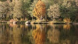 Autumn Reflections Footage