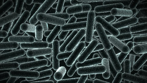E. Coli virus - electron microscope view Stock Video Footage