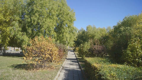Autumn Park 02 (pan up) Stock Video Footage