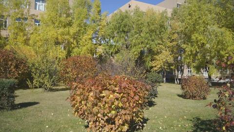 Autumn Park 04 (pan up) Stock Video Footage