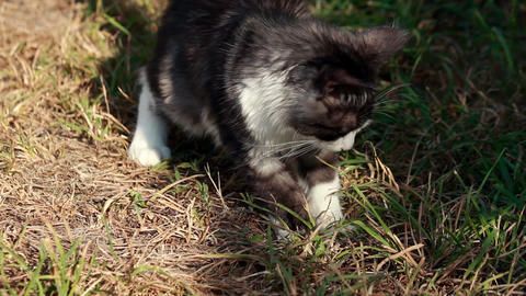 Cat And Grasshoppers