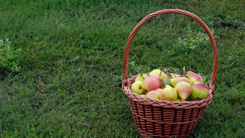 Fruits - Pears