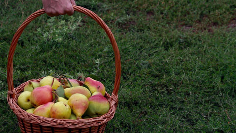 Organic apples and pears in a basket outdoor Stock Video Footage
