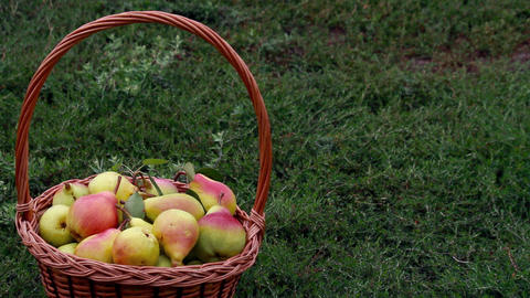 Fruits - Pears 0