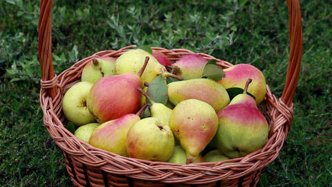 Fruits - Pears 1