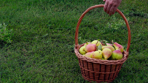 Fruits - Pears 2
