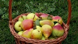 Organic apples and pears in a basket outdoor Footage