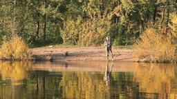 fishing on the autumn Stock Video Footage