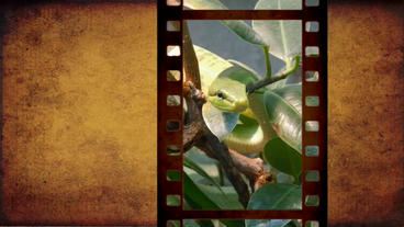 Film _album _AEProject After Effects Templates