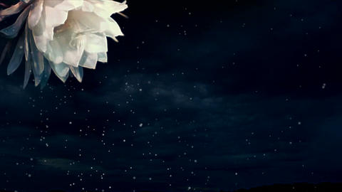 Flower animation Stock Video Footage