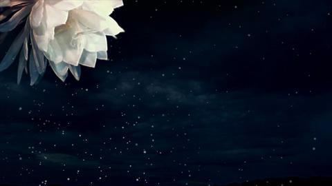 Flower animation Animation