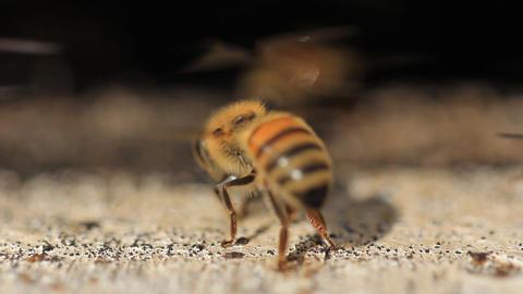 Bees nest make honey Stock Video Footage