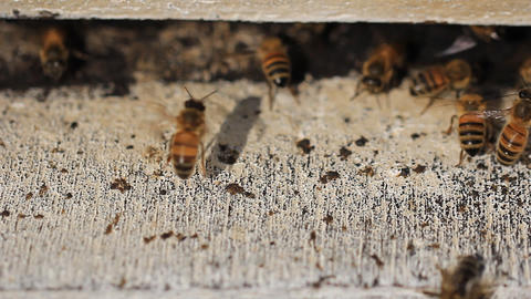 Bees nest make honey Stock Video Footage