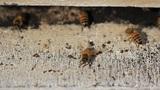Bees nest make honey Footage