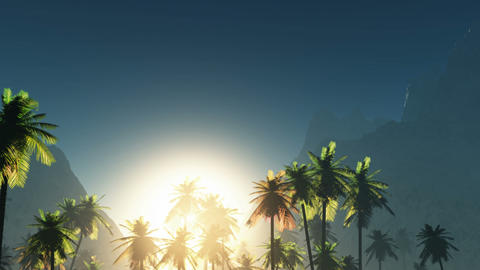 Tropical jungle background with palm tree silhouettes at sunset Animation
