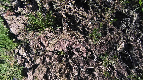 Tilled soil, black soil Footage