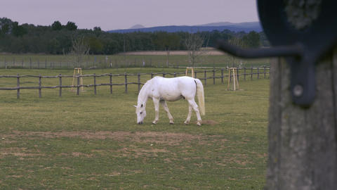 Beautiful, lonely white horse eats grass at the field Footage