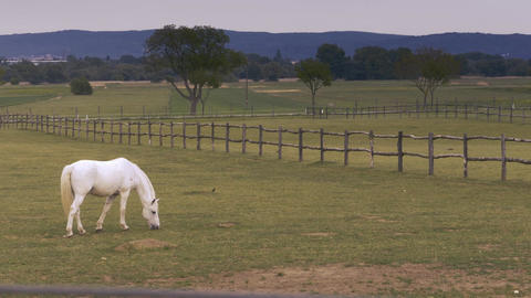 Beautiful, lonely white horse eats grass at the farm Footage