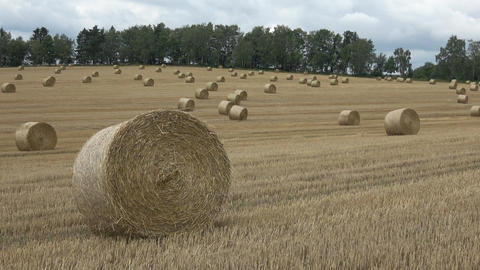 Beautiful landscape. Agricultural field. Round bundles straw bales in the field Footage