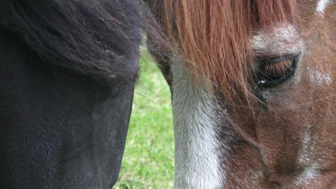 Horses on the ranch eat dry food. Portrait of a horse eating, feeding Footage